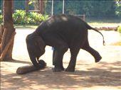 Elephant Working: by msoleksy, Views[57]