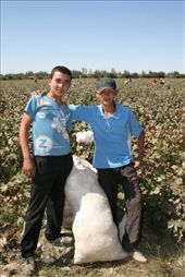 Uzbekistan - cotton picking season just started: by niviosabine, Views[160]