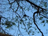monkeys in the trees above us: by nomad_kiwis, Views[139]