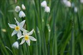 Para mim, as flores passaram ser um sinônimo de temperaturas mais agradáveis. 11ºC, Uhu!: by pauloaprado, Views[436]