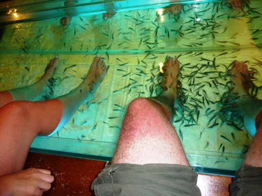 Dr fish in phi phi eating away the dead skin looks for Skin eating fish