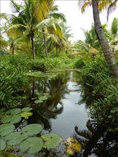 The Kerala backwaters.: by pommie51, Views[126]