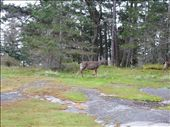 Deer at Ruckle Park: by rob_berman82, Views[75]