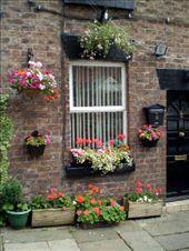 Window boxes, Woolton Village: by ronsan, Views[99]