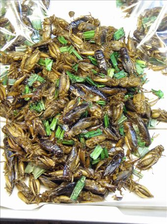 more fried bugs at the food market...bluuuurgh...