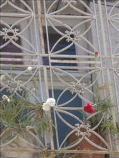 Flowers growing through the cages: by shrummer16, Views[154]