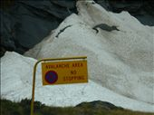 These signs were all over the road to Milford Sound - pretty scary!: by simoz, Views[460]
