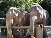 elephant park: by sven, Views[262]