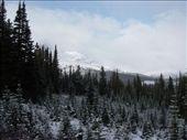 wild christmas trees everywhere!: by sweeney, Views[173]