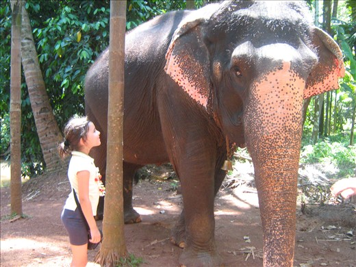 Spice Farm Goa Elephant Spice Farm Ponda Goa