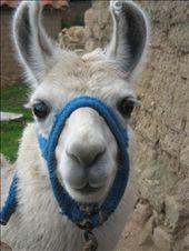 Awww, how cute am I?: by thehappyeggs, Views[182]