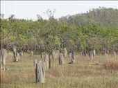 Magnetic Termite Mounds: by thewoodies, Views[60]