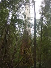 This one is 80m (!) tall: by thomasz, Views[46]