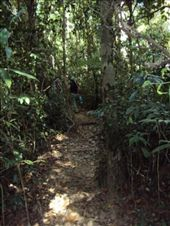 The jungle. On the way to Bokor hill-station.: by utegute, Views[155]