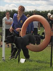 Pippin starts the agility test, Hounds and Hares Dog Agility Competition: by vagabonds, Views[179]