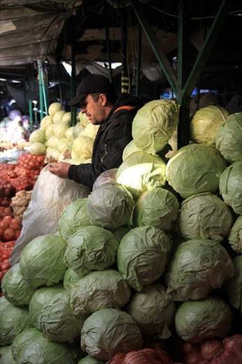 The Cabbage Guy, Pristina