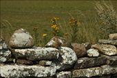 Stone wall, Oland Island WHS: by vagabonds, Views[146]
