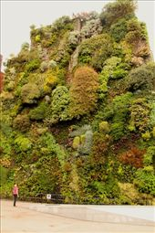 Vertical garden near our hotel, an up-and-coming thing in Europe, Madrid: by vagabondstoo, Views[61]
