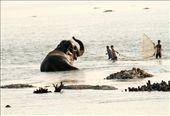 Fishing for elephants?  Manas National Park, Assam: by vagabondstoo, Views[62]