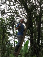 Removing fungus from the trunks of trees to hopefully increase their productivity. : by viajerofrye, Views[104]